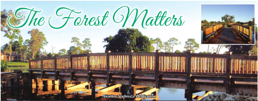 The Forest Matters